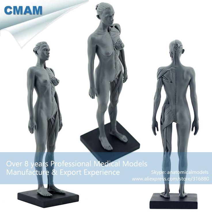 (48.99$)  Watch now  - CMAM-PRC02 30cm Human Female Model Anatomy Skull Head Muscle Bone Medical Artist Drawing Skeleton for Sale