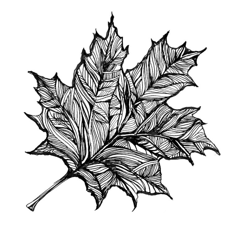 1000 Ideas About Leaf Drawing On Pinterest Pen Drawings