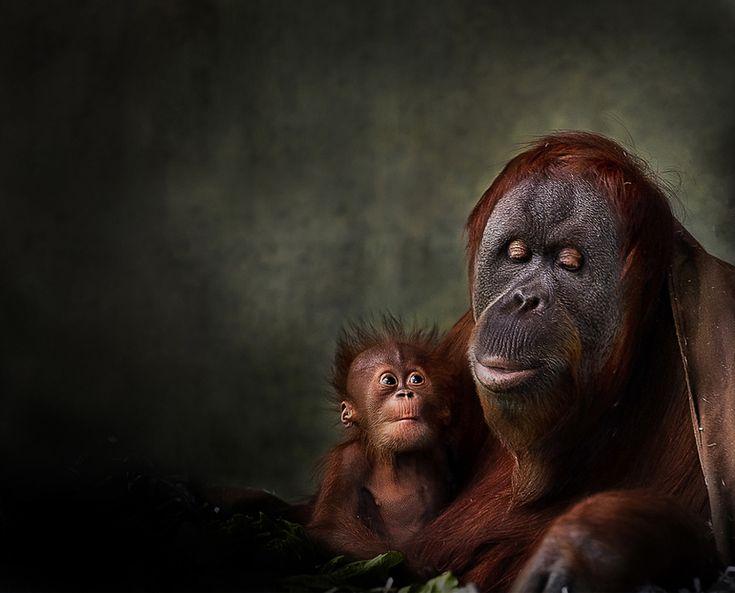 (+99) Mi padre es un animal :Imágenes impresionantes de animales - Taringa!