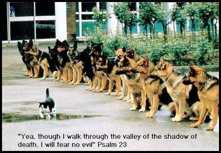 """Yea, though I walk through the valley of the shadow of death, I will fear no evil."" PSALM 23"