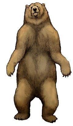 The south american short-faced Bear, Arctotherium (1879) Phylum : Chordata Class : Mammalia Order : Carnivora Superfamily : Arctoidea Family : Ursidae Subfamily : Tremarctinae Genus : Arctotherium Species : A. angustidens, A. bonariense, A....