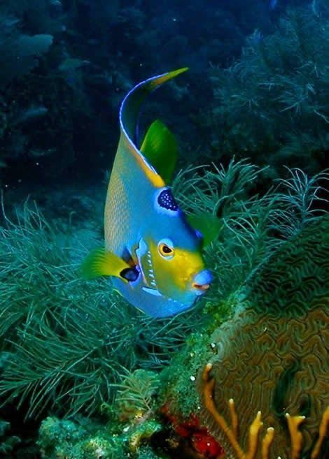 sea and ocean life - fish