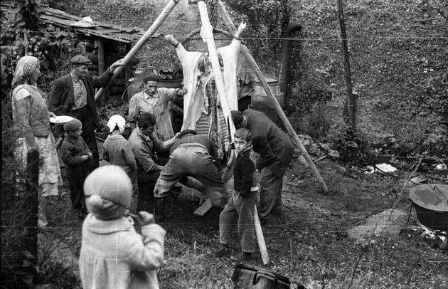 Disznóvágás 1959-ben