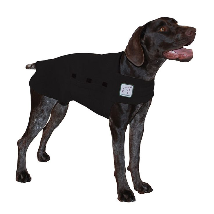 Black German Shorthaired Pointer GSP Dog Tummy Warmer, great for warmth, anxiety and laying with our dog rain coat. High performance material. Made in the USA.