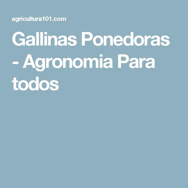 Gallinas Ponedoras - Agronomia Para todos