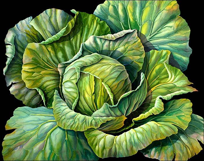 """Cabbage on Black Background by Susanna Blaxill  """"The blues, greens and purples in this cabbage study appeared most vibrant and exciting when set against a black background. A looser watercolour style was used to express the flowing hues of the subject, and the generous character of the plant.""""  Susannah is a modern Australian artist specializing in botanical watercolors and pencil drawings.  Her life and work are featured on www.blaxill.com"""