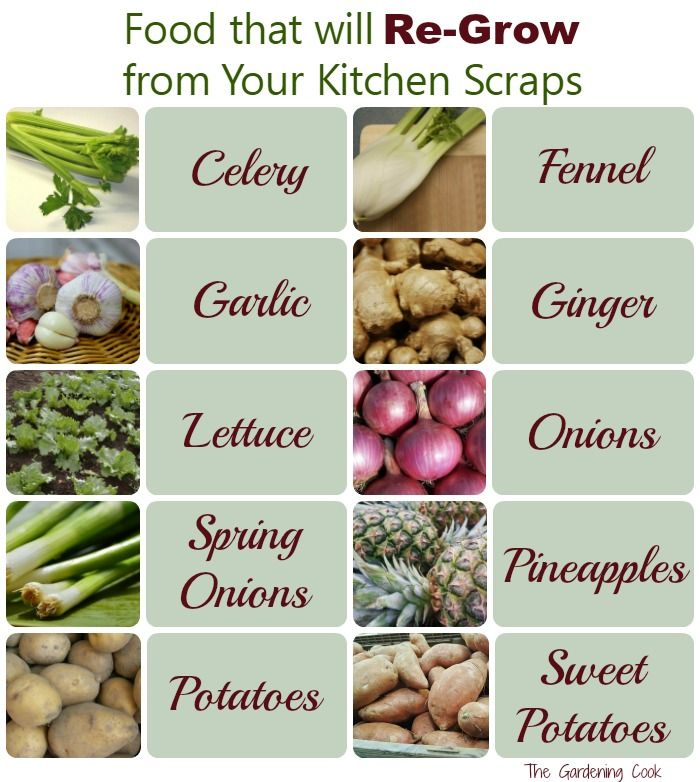 Regrow your food! There are lots of foods that will regrow from Kitchen scraps. See how to turn your kitchen left overs into more food. thegardeningcook.com