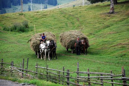 Daily life in Transylvania Photo by Reka Peti-Peterdi -- National Geographic Your Shot