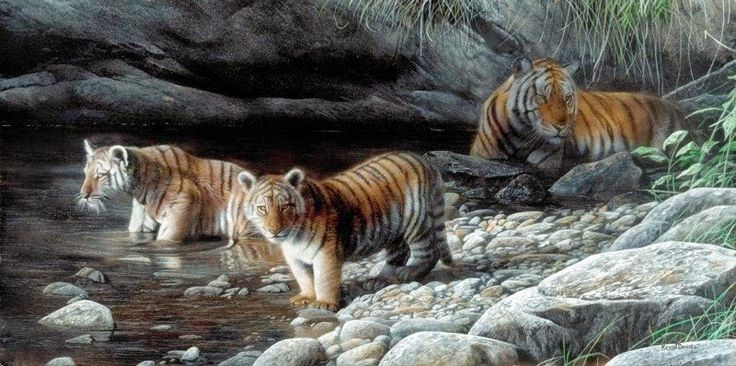 D.W.C. Animals Life - Painter Kevin Daniel   DANCE WITH COLORS