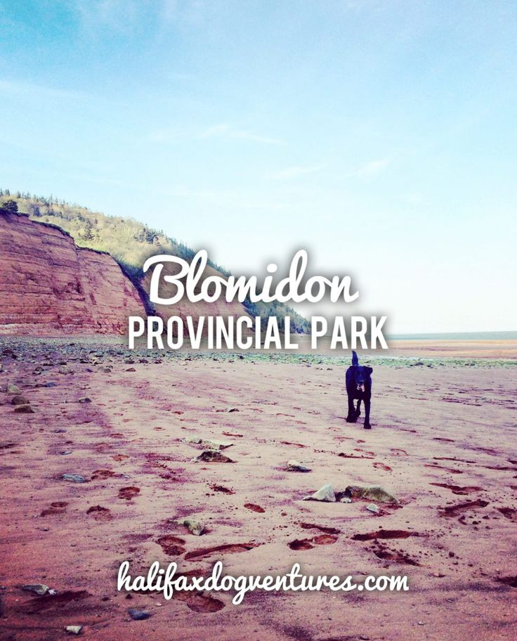 Blomidon Provincial Park in Nova Scotia offers stunning hikes, and the beach walk at low tide is not to be missed! halifaxdogventures.com