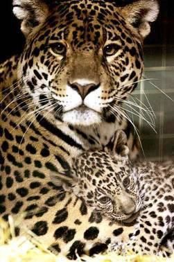 Leopard Mama & Her Baby. Happy Mother's Day!