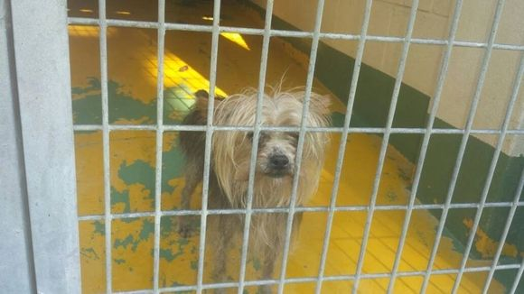 Pétition · Exigimos la concesión de nuestra perrera a una asociación protectora de animales. Sacrifico, maltrato animal y engaños cero!!! · Change.org