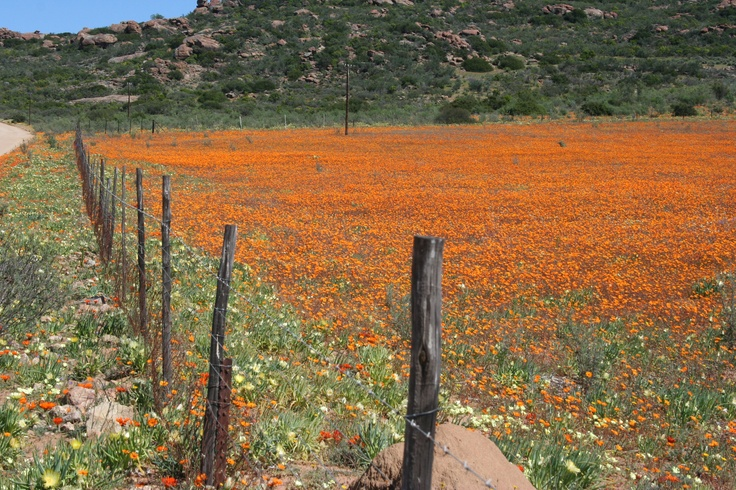Northern Cape : South Africa: September 2011