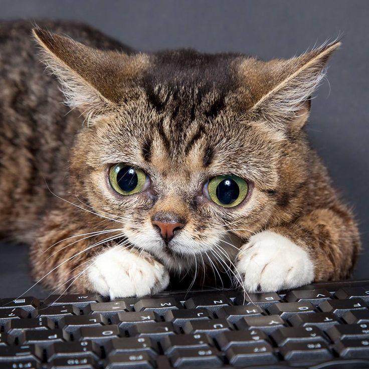 Bub at keyboard