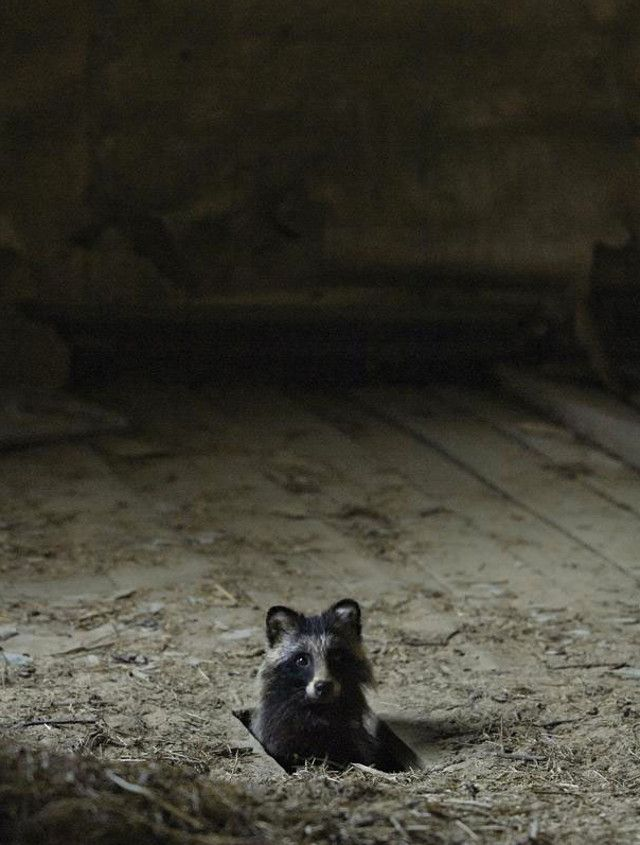 Kai Fagerström published in National Geographic a photo series entitled 'Once Upon a Home' where animals have taken possession of an abandoned house.