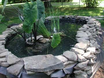 Step by step turtle pond definitely going to do this for Above ground fish pond designs