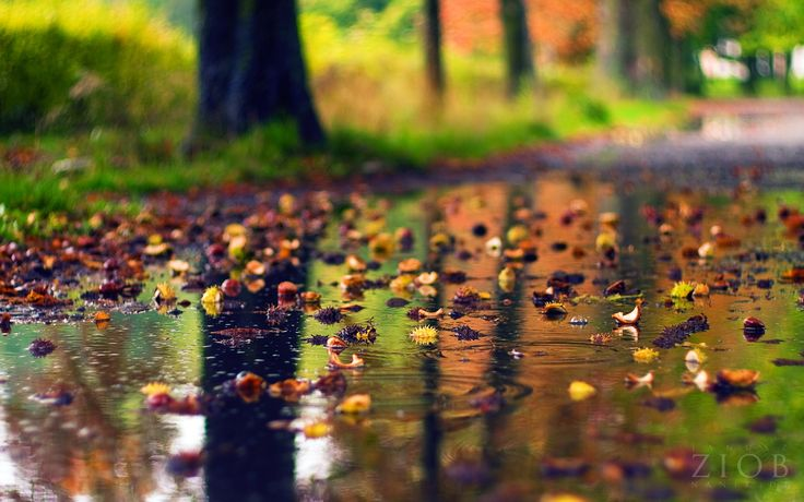 Wallpapers Rainy Season Scenery Selected Beautiful ...