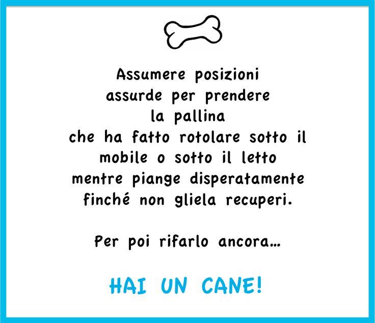Hai un cane se... www.cancorso.it cancorso2013, cancorso, cani, cane, concorso, concorsi, contest, ilmessaggero, quotidiano, animali, storie, canstorie, coppie, cancoppie, citazioni, aforismi