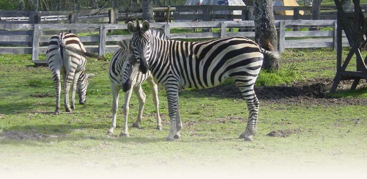 Horarios y tarifas — Marcelle Natureza — Parque Zoológico cerca de Lugo, rutas, excursiones, campamentos, picnic