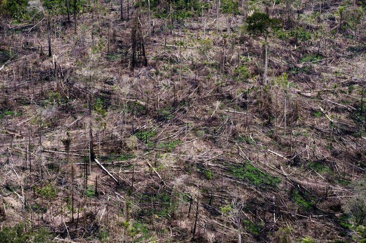 Licença simplificada e mineração são prioridades para Amazonino e Braga no AM   25.08.2017   Mas a questão ambiental de um estado que ainda tem preservado 97% de sua cobertura florestal (Inpe) ficou em 5º plano, como se observa na  análise do plano de governo apresentado por eles à JE. Essa lacuna fica exposta quando parte da população amazonense vem sendo impactada pelos efeitos das mudanças climáticas. Quem mais sente esses impactos são as comunidades rurais espalhadas pelo vasto…