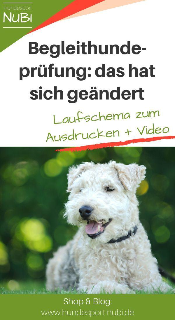 Neue Prufungsordnung Igp 2019 Laufschema Der Begleithundeprufung Zum Ausdrucken In 2020 Hundesport Hunde Welpen Erziehen