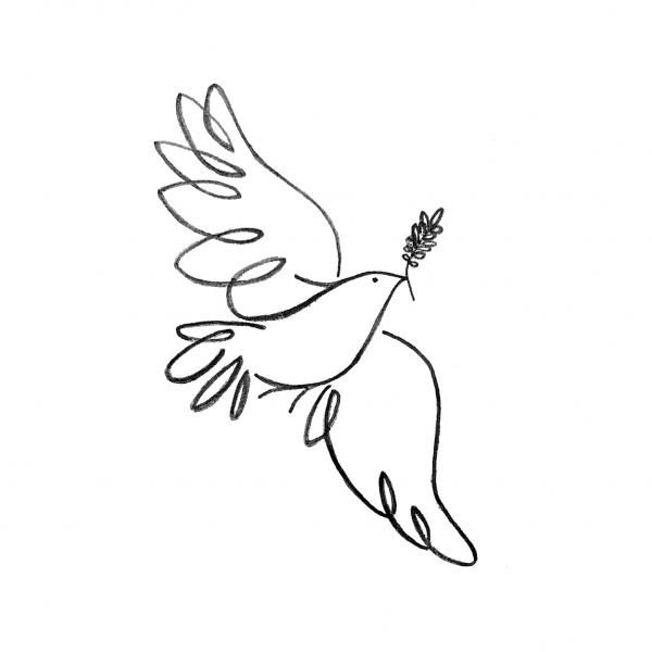 Peace Dove Drawing  - Peace Dove Fine Art Print OTRA OPCIÓN SIN RAMITA