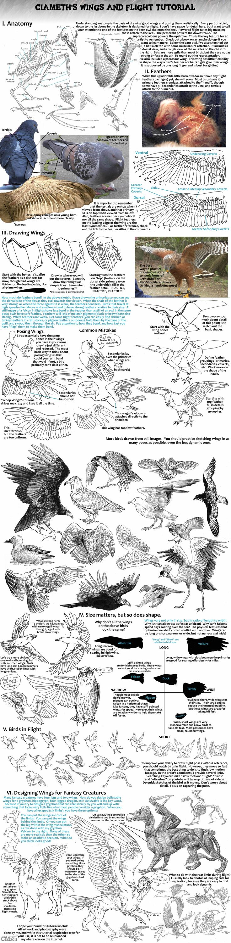 Ciameth's Wing Tutorial    wonderful...all you need to know of wings and birds