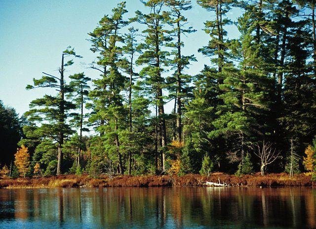 12) Sylvania Wilderness and Recreation Area