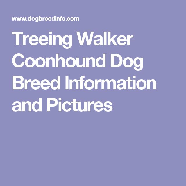 Treeing Walker Coonhound Dog Breed Information and Pictures