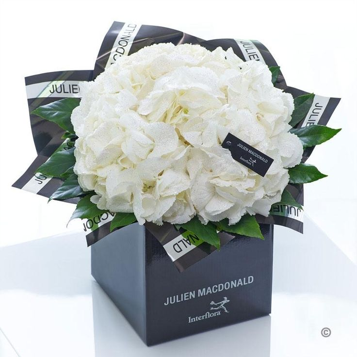 Bursting with exuberance and vitality, these exquisite hydrangea make a wonderful gift. The abundance of delicate white petals ensures there is plenty to admire. By opting for pristine white with a little foliage, the natural splendour of these flowers really stands out.
