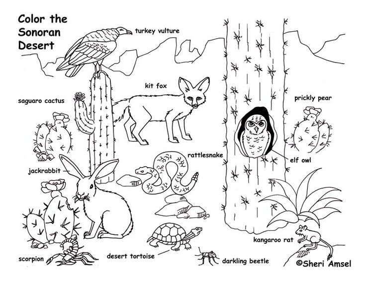 Desert Animals Coloring Page