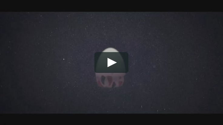 Title: Ballet of Unhatched Chicks Running Time: 2min  Director: Shaun Seong-Young Kim Storyboard, Layout, and animation :Shaun Seong-Young Kim Texture: So-young…