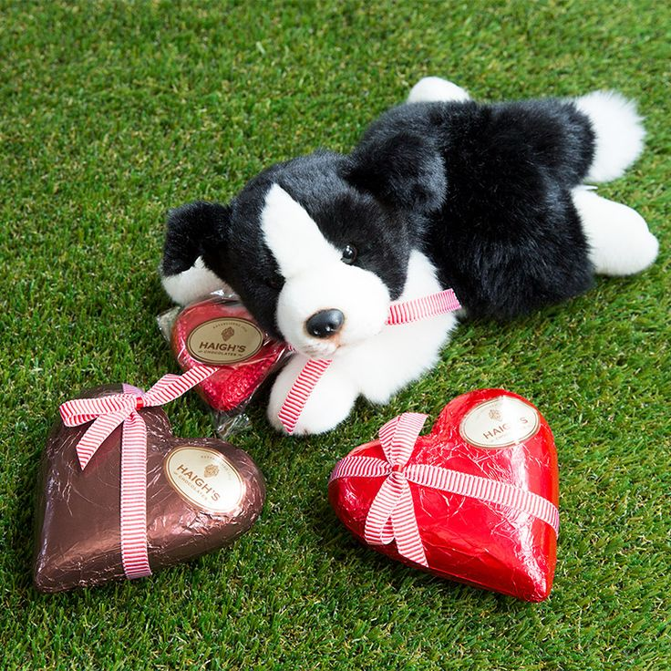 """Delicious premium Haigh's milk and dark chocolate hearts and a Border Collie soft toy. Say """"I love you"""" with Haigh's"""