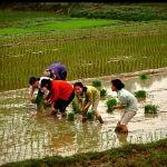 Вьетнам. Горящие туры во Вьетнам http://fivetravel.ru/hot_turs.html?STA=0&country=119