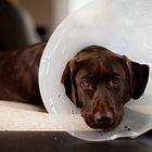 Dog Health Care website