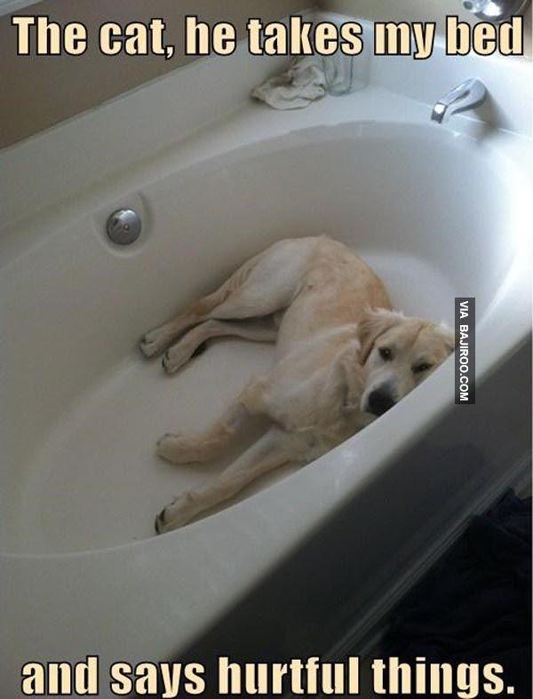 Nope cat bathtub