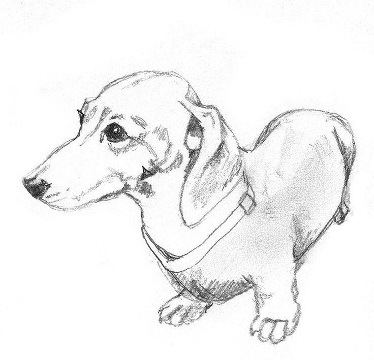 рисунки такса собака браги пшенице без