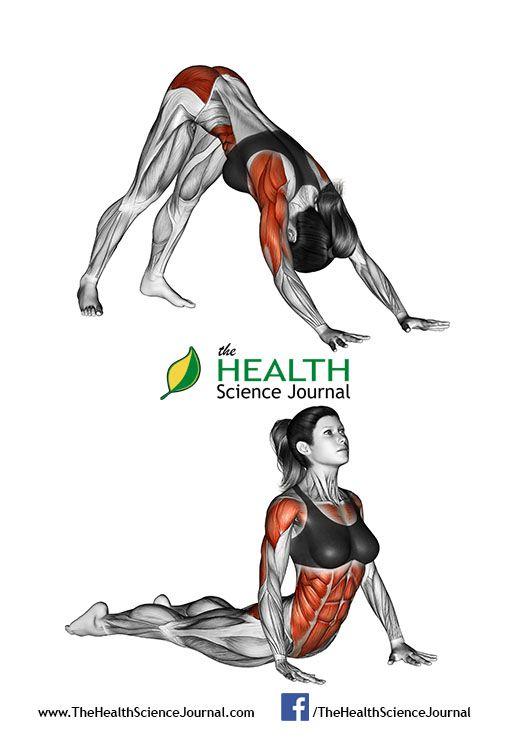 © Sasham | Dreamstime.com – Fitness-Yoga exercising. Indian push-ups. Female