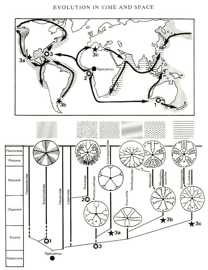 worksheets anatomy of a sand dollar google search stem pinterest sand dollars westerns. Black Bedroom Furniture Sets. Home Design Ideas