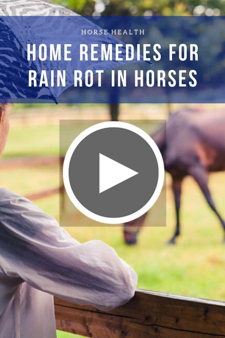 Home Remedies For Rain Rot In Horses Rain Rot Horse Rain Rot Horse Health