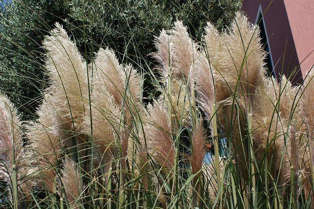 Las plantas aut ctonas m s lindas blog - Plantas perennes exterior ...