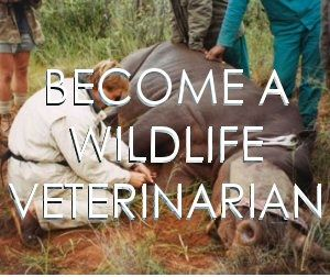 And I would like to work as a wildlife veterinarian, because pets already have enough attention. I would like to be able to help wild animals in need so that they can have better and longer lives.