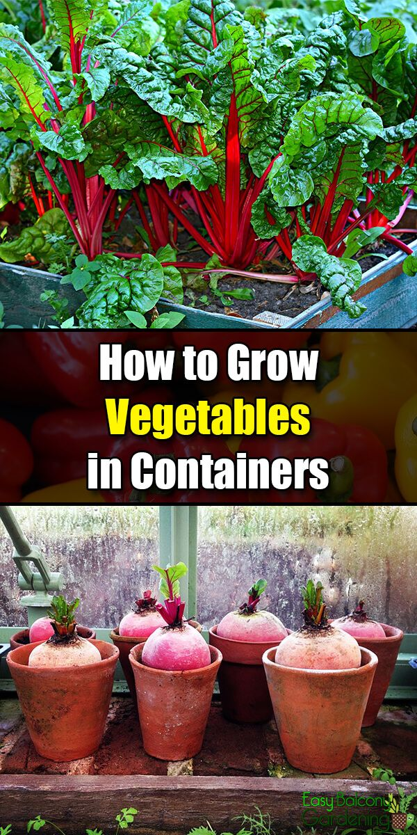 How To Grow Vegetables In Containers Growing Vegetables
