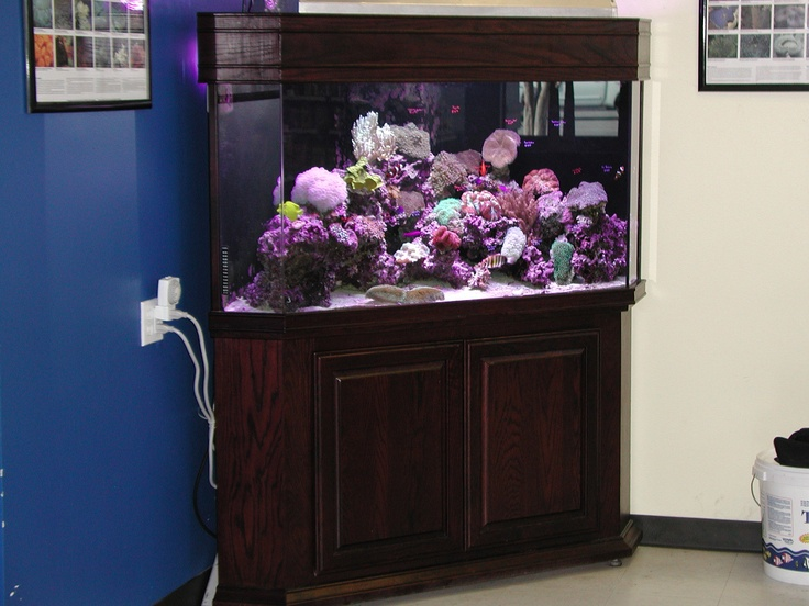 Man Cave With Tank : 8 best andy's man cave images on pinterest fish aquariums