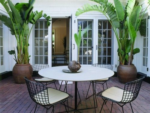 Love The Potted Banana Palms And Table/chairs Adds Something Unexpected  Which I Like