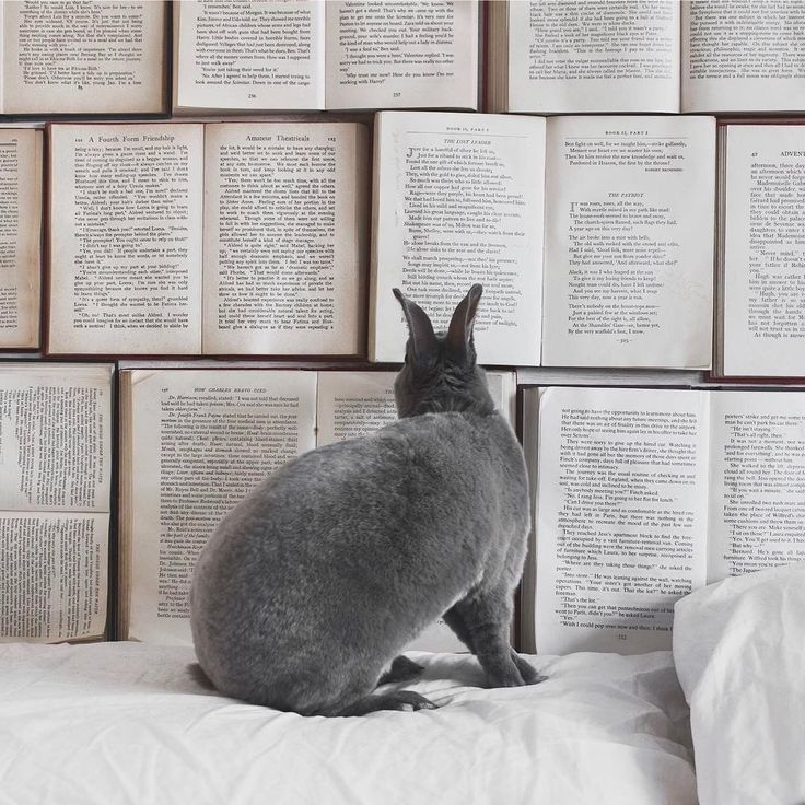 "3,177 aprecieri, 19 comentarii - Culture Trip Books (@culturetripbooks) pe Instagram: ""You know we love cats and dogs,its no secret. But we also love rabbits 🐰. Specially a rabbit who…"""