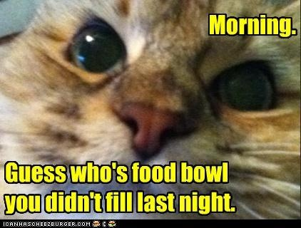 Today's LOL  Almost Friday! Have a very happy day!! Morning!: Good Mornings, Cutefunni Animal, Cat Humor, Animal Lolz, Bad Kitty, Funny Stuff, Animal Smile, Funny Animal, Cat Lady