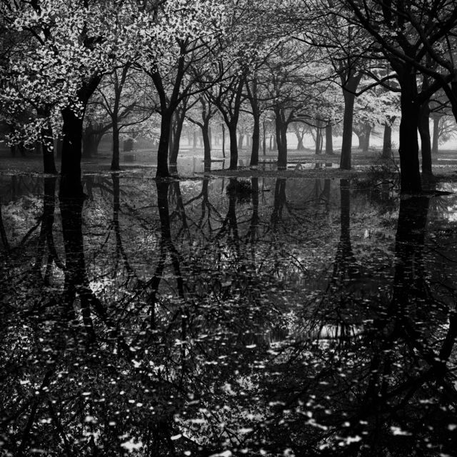 Toshio Enomoto | 016 - Cherry tree woods in Yoyogi Park after a spring storm (1994), Available for Sale | Artsy