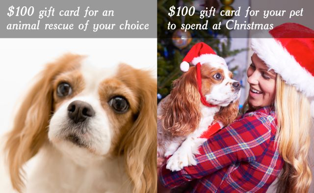 Joy of Giving Christmas Contest - Win $100 gift card for you and a $100 gift card for an animal rescue of your choice. Follow the link to enter (AUS residents only)