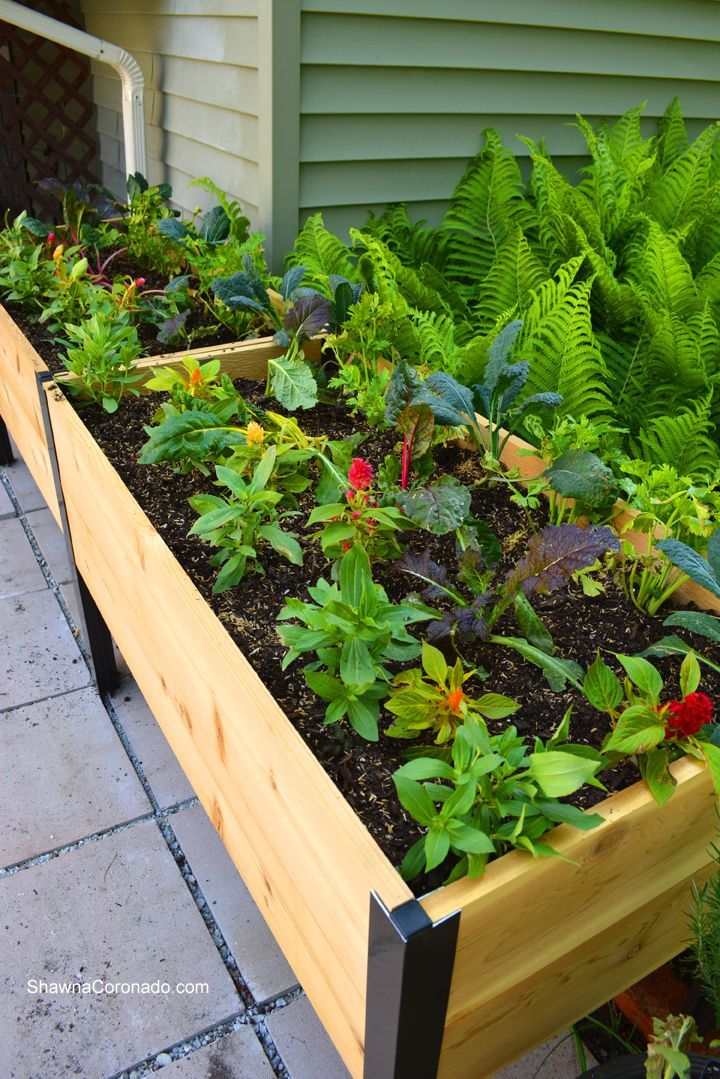 How To Plant an Elevated Garden Bed | Shawna Coronado